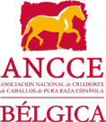 ANCCE-Bélgica logo