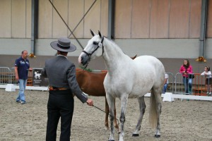 Querida S, Yeguada Van Hove, CM Massenhoven 2013