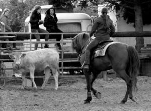 Brujo XXXIX, Yeguada Ostentosa