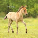 Cielo de Capg, Capg-Horses, Sanne Harmsen Fotografie