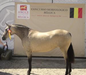 Cazadora AG, Antwerp Andalusians, CM Oud-Heverlee 2016