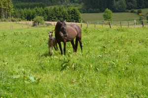 Gitana & Azaya, Haras de la Rodge Creux