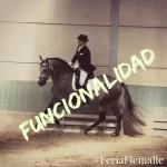 Functionalidad