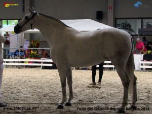 Querida S, Yeguada Van Hove, CM Oud-Heverlee 2015