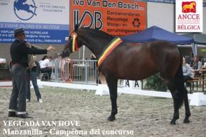 Manzanilla XCVI, Yeguada Van Hove, CM Massenhoven 2013