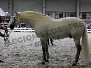 Jalisco Larios, Antwerp Andalusians, CM Oud-Heverlee 2014