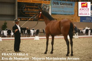 Evo de Montarco, Franceso , CM Massenhoven 2013