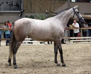 Querida S, Yeguada Van Hove, CM Flémalle 2010