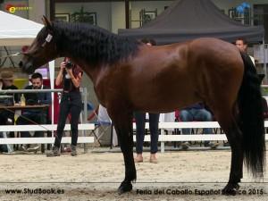 Becario ER, Elevage Donzel, CM Oud-Heverlee 2015