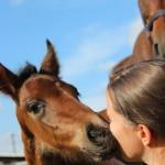 Fénix de Capg, Capg-Horses