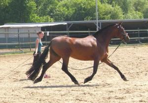 Elevada YML, Capg-Horses