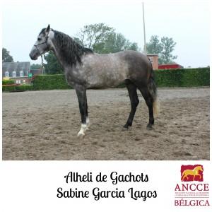Alheli de Gachots - Sabine Garcia Lagos met logo 2