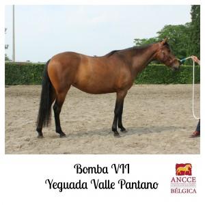 Bomba VII - Yeguada Valle Pantano