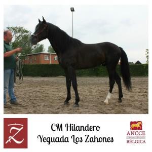 CM Hilandero - Yeguada Los Zahones met logo 2