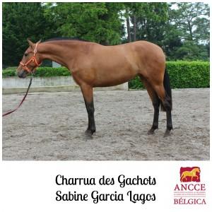 Charrua des Gachots - Sabine Garcia Lagos met logo 2