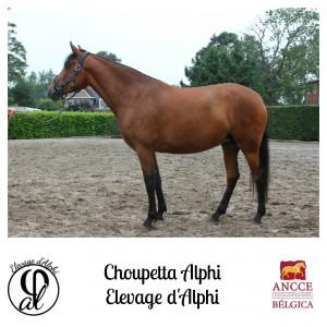 Choupetta Alphi - Elevage d'Alphi met logo 2