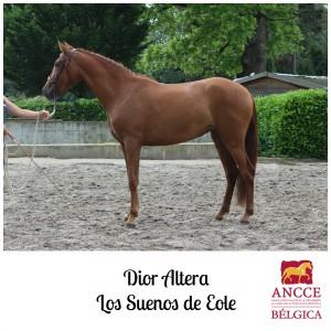 Dior Altera - Los Suenos de Eole met logo 2