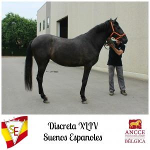 Discreta XLIV - Suenos Espanoles met logo 2