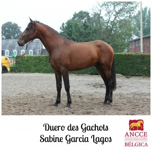 Duero des Gachots - Sabine Garcia Lagos met logo 2