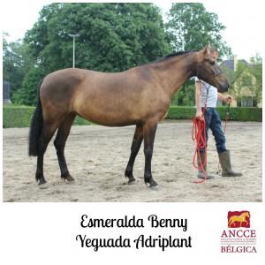Esmeralda Benny - Yeguada Adriplant met logo 2