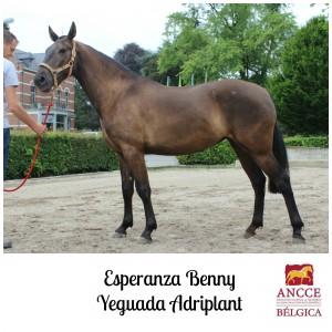 Esperanza Benny - Yeguada Adriplant met logo 2