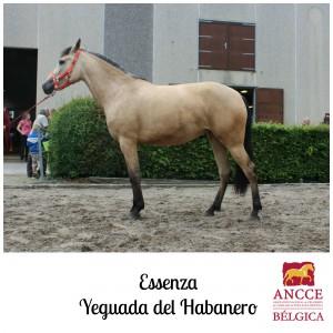 Essenza - Yeguada del Habanero met logo 2