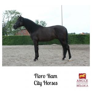 Floro RAM - City Horses met logo 2