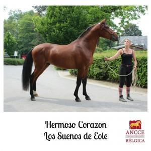 Hermoso Corazon - Los Suenos de Eole met logo 2