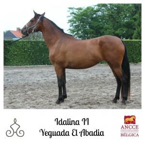 Idalina II - Yeguada El Abadia met logo 2
