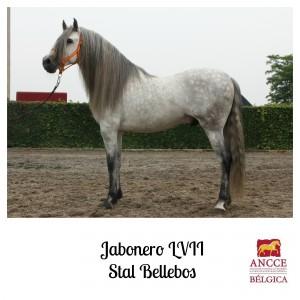 Jabonero LVII - Stal Bellebos met logo 2