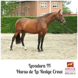 Levadura II - Haras de La Rodge Creux met logo 2
