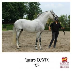 Lucero CCXIX - XP met logo 2