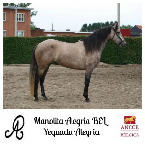 Manolita Alegria BEL - Yeguada Alegria met logo 2