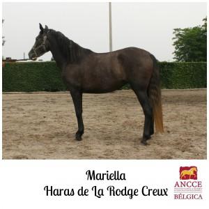 Mariella - Haras de La Rodge Creux met logo 2