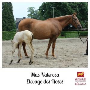 Mas Valerosa - Elevage des Roses met logo 2