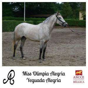 Miss Olimpia Alegria - Yeguada Alegria met logo 2