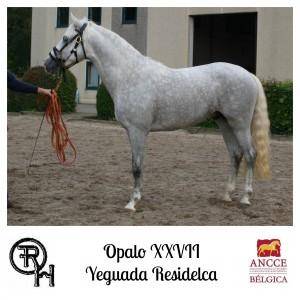Opalo XXVII - Yeguada Residelca met logo 2