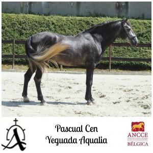 Pascual CEN - Yeguada Aqualia met logo 2