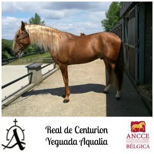 Real de Centurion - Yeguada Aqualia met logo 2