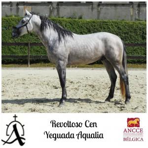Revoltoso CEN - Yeguada Aqualia met logo 2