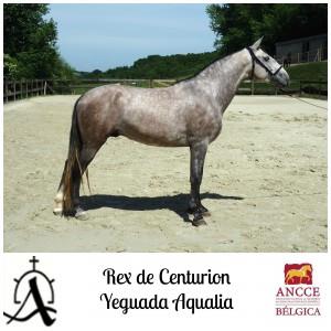 Rex de Centurion - Yeguada Aqualia met logo 2