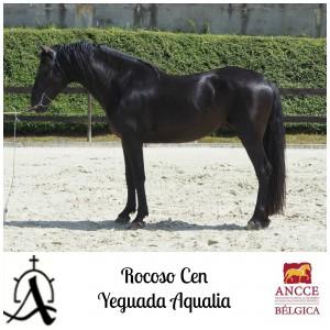 Rocoso CEN - Yeguada Aqualia met logo 2
