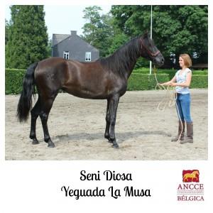 Seni Diosa - Yeguada La Musa met logo 2