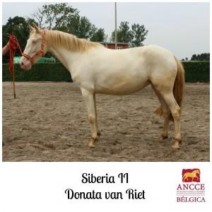 Siberia II - Donata van Riet met logo 2