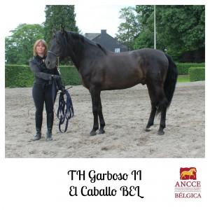 TH Garboso II - El Caballo BEL met logo 2