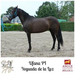 Ufana PI - Yeguada de la Luz met logo 2