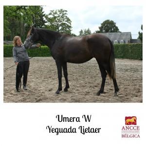 Umera W - Yeguada Lietaer met logo 2