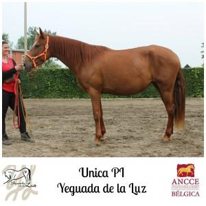 Unica PI - Yeguada de la Luz met logo 2
