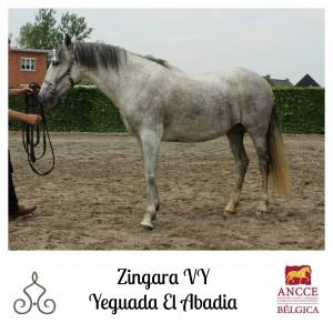Zingara VY - Yeguada El Abadia met logo 2
